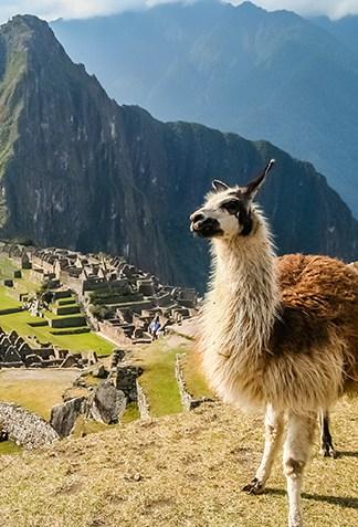 Machu Picchu_Mobile